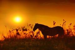 Hästsilhouette på solnedgången arkivbilder