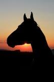 Hästsilhouette på solnedgången royaltyfri illustrationer