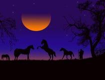 hästsilhouettesolnedgång Arkivfoto
