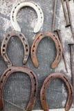 hästsko Arkivbilder