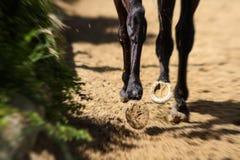 Hästskor royaltyfri fotografi