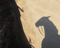 Hästskugga Royaltyfria Bilder