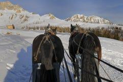 Hästsläde på snön Royaltyfri Foto