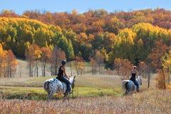 Hästslinga i nedgångfärger Royaltyfria Foton