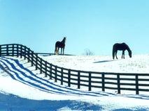 hästsnow Arkivbilder