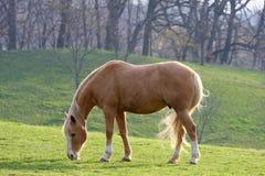 hästsolbränna Royaltyfria Bilder