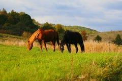 hästsolnedgång Royaltyfri Foto