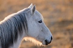 hästsolnedgång Royaltyfria Bilder