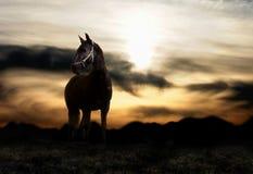 hästsolnedgång Arkivbild