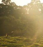 Hästsoluppgång Fotografering för Bildbyråer