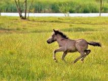 hästspring i fältet royaltyfri foto