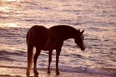 Hästspring till och med vatten Fotografering för Bildbyråer