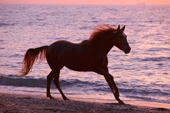 Hästspring till och med vatten Royaltyfria Bilder