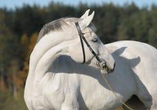 häststående Royaltyfri Bild