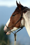 häststående Royaltyfria Bilder