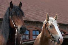 häststående Arkivfoton