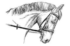 Häststående med tygeln Royaltyfri Bild