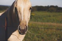 Häststående på lantlig ranch arkivfoto