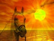 hästståendesolnedgång Royaltyfri Foto