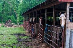 Häststall Royaltyfri Bild
