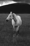 häststanding arkivbilder