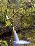 Hästsvansnedgångar i den Columbia River klyftan Arkivbild