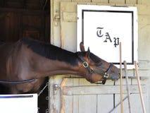 Hästtillflyktsort Saratoga för ledar- plan royaltyfria bilder