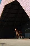 Hästträskulptur: Brun träsnideristaty under stora Hanga Arkivbild
