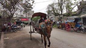 Hästvagn i Bagan, Myanmar lager videofilmer