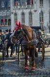 Hästvagn i den härliga Bruges staden, Belgien arkivbilder