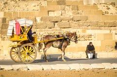 Hästvagn i Giza, Egypten Arkivbild