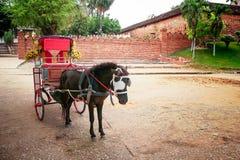 Hästvagn i Thailand Arkivbild