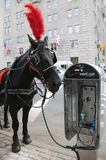 Hästvagn nära Central Park på den 59th gatan i Manhattan Royaltyfri Foto