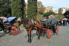 Hästvagn på Rome, Italien Arkivbilder