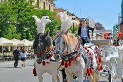 Hästvagnen för stadssight turnerar i Krakow Arkivfoto