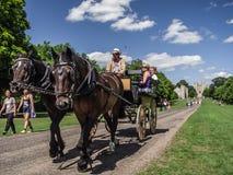 Hästvagnsritt i Windsor Royaltyfria Bilder