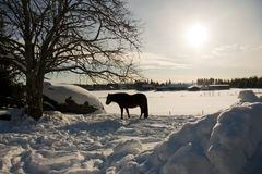hästvinter Arkivbilder