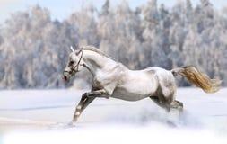 hästvinter royaltyfri fotografi