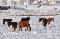 hästvinter Royaltyfri Bild