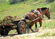 hästworking Arkivfoto