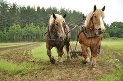 hästworking Royaltyfri Bild