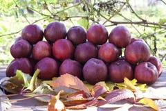Häufen Sie mit roten Äpfeln auf Tabelle im Garten Stockbild