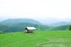 Häuschen auf grünem Reisfeld mit Gebirgshintergrund an PA bong piang Dorf, Chiang Mai, Thailand stockbilder