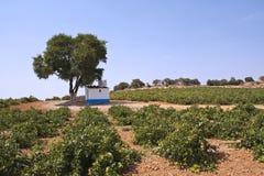 Häuschen in einem Weinberg Stockbild