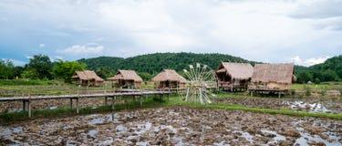 Häuschen mit Reis in Thailand- und Gebirgshintergrund, kleines Feldbett lizenzfreie stockbilder