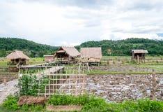 Häuschen mit Reis in Thailand- und Gebirgshintergrund, kleines Häuschen im Reisfeld bei Chiang Dao lizenzfreies stockbild