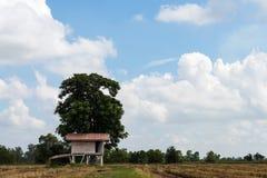 Häuschen mit Reisstoppel und -himmel Stockfoto