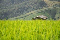 Häuschen- oder Hüttenreisfeldhintergrund Stockfoto