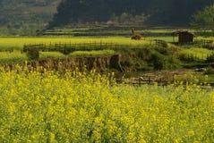 Häuschen und gelber Blumen-Bauernhof Lizenzfreie Stockfotografie