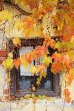 Häuschenfenster mit herbstlichen farbigen Weinblättern Lizenzfreies Stockfoto